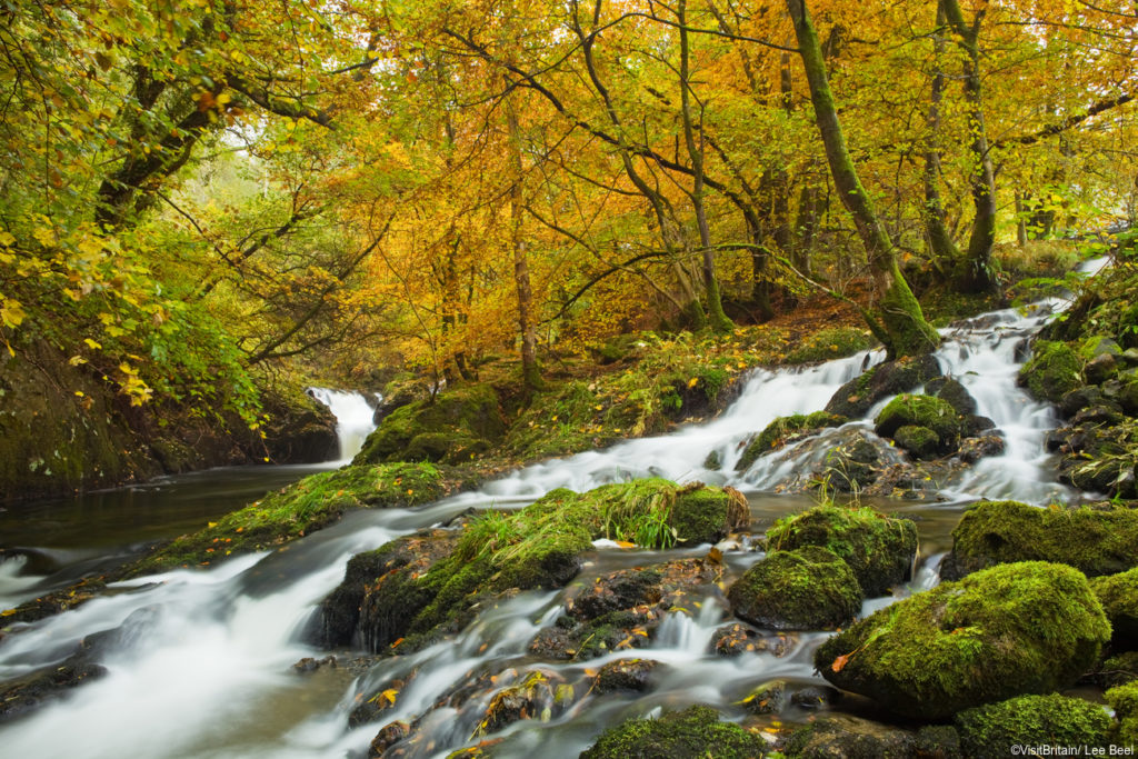 Woodland around Bala Lake (Lyn Tegid) in the Snowdonia National Park in Wales. Autumn foliage. Beech woods. Stream flowing downhill.