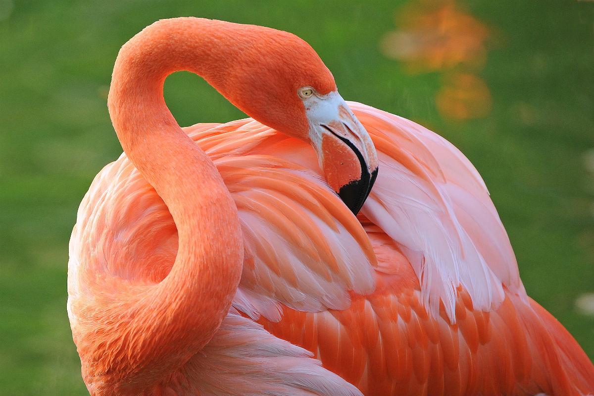 A pink flamingo at Zoo Miami